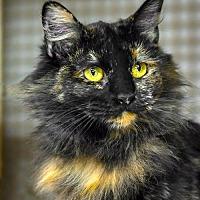 Adopt A Pet :: Nuance - Albuquerque, NM