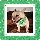 Adopt A Pet :: Jacqueline