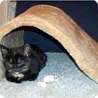 Adopt A Pet :: Chattahoochee - Alexandria, VA