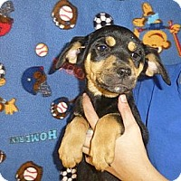 Adopt A Pet :: Mela - Oviedo, FL