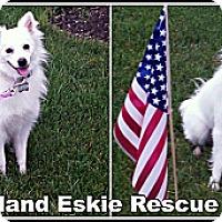 Adopt A Pet :: Libby - Elmhurst, IL