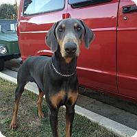 Adopt A Pet :: Max - Van Nuys, CA