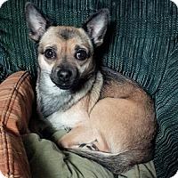 Adopt A Pet :: Dolly - Hamilton, ON