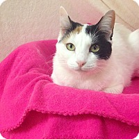 Adopt A Pet :: Fantasia - Foothill Ranch, CA