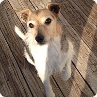 Adopt A Pet :: Sparky - Farmingtoon, MO