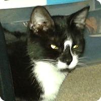 Adopt A Pet :: Aura - Fairborn, OH