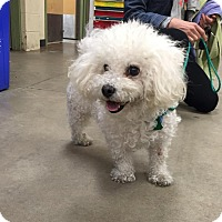 Adopt A Pet :: Donald - Wilmington, DE