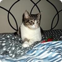 Adopt A Pet :: Nicki - Vancouver, BC