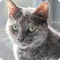 Adopt A Pet :: Chloe - Edwardsville, IL