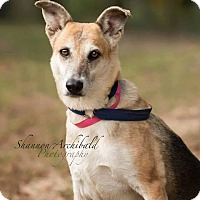 Adopt A Pet :: Adala - Greeneville, TN