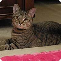 Adopt A Pet :: Maytag - Merrifield, VA
