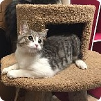 Adopt A Pet :: Vella - Manchester, CT