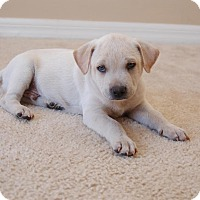 Adopt A Pet :: Max - Windermere, FL