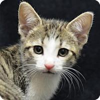 Adopt A Pet :: Wesson160321 - Atlanta, GA