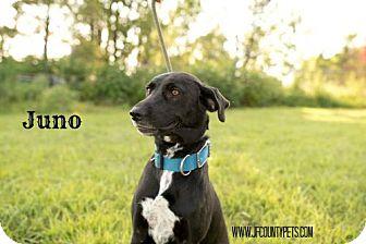 Labrador Retriever Mix Dog for adoption in Valley Falls, Kansas - Junie