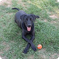 Adopt A Pet :: Katie - Andalusia, AL