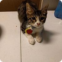 Adopt A Pet :: Mr. Slippers-13396 - Richardson, TX