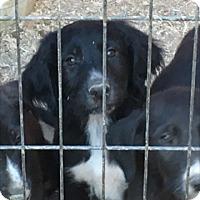 Adopt A Pet :: Paul - Thousand Oaks, CA