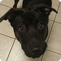 Adopt A Pet :: Gerald - Paterson, NJ