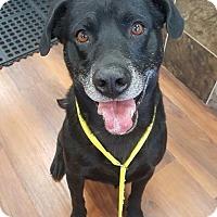 Adopt A Pet :: Guinness - Florence, KY