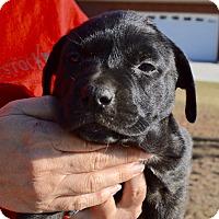 Adopt A Pet :: Amanda-ADOPTED - Allen town, PA
