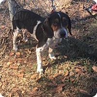 Adopt A Pet :: KC - Tampa, FL
