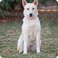 Adopt A Pet :: Bonnie - Washoe Valley, NV