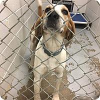 Adopt A Pet :: Nick - Paterson, NJ