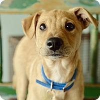 Adopt A Pet :: Anastasia - San Antonio, TX