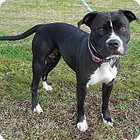 Adopt A Pet :: Princess - Newport, NC