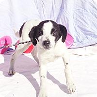 Adopt A Pet :: Johan - West Chicago, IL