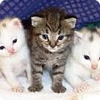 Adopt A Pet :: CAT/KITTEN FOSTERS NEEDED! - Sparta, NJ