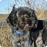 Adopt A Pet :: Romo - Cheyenne, WY