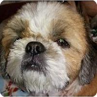 Adopt A Pet :: Sam-PA - Mays Landing, NJ