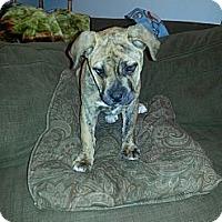 Adopt A Pet :: Apelonia - East Rockaway, NY