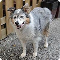 Adopt A Pet :: Heidi - Hamilton, ON
