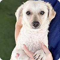 Adopt A Pet :: Darby - Mission Viejo, CA