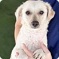 Adopt A Pet :: Darby - Mission Viejo, CA