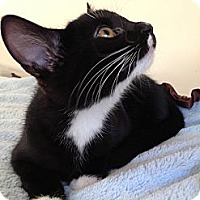 Adopt A Pet :: ROSIE - 2013 - Hamilton, NJ