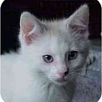 Adopt A Pet :: Shiloh (w/ Maddox) - Portland, OR