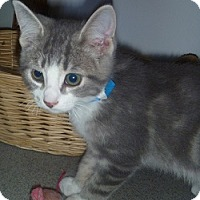 Adopt A Pet :: Dusty - Hamburg, NY