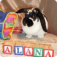 Adopt A Pet :: Alana - Newport, DE