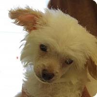 Adopt A Pet :: Crash - Phoenix, AZ