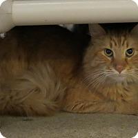 Adopt A Pet :: Luke - Geneseo, IL