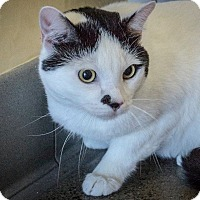 Adopt A Pet :: Sherpa - Novato, CA