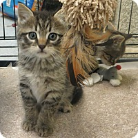 Adopt A Pet :: Elle - Brockton, MA