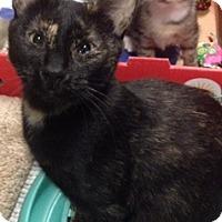 Adopt A Pet :: Adelaide - Long Beach, NY