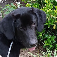 Adopt A Pet :: Alfie Adopted - Preston, CT