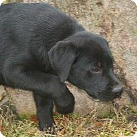 Adopt A Pet :: Vulcan - Elmwood Park, NJ