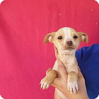 Adopt A Pet :: Asha - Oviedo, FL